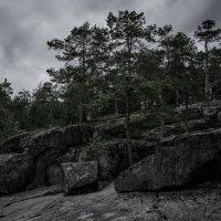 Тёмный лес 2 :: Павел Харлин