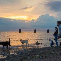 прогулка на заливе :: юрий затонов