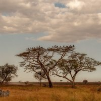 Вечерняя саванна...Танзания! :: Александр Вивчарик
