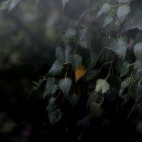 Дождливый последний день июля...  2 :: Валерия  Полещикова
