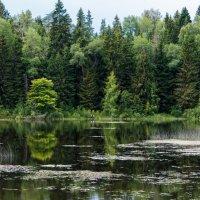 Хорошее место для рыбалки. :: Владимир Безбородов