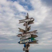 Куда поедем? :: Elena Ignatova