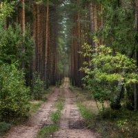 Погружение в лес :: Ольга Бородина