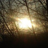 Солнечный свет. Автор: Мира Озерская. :: Мира Озерская