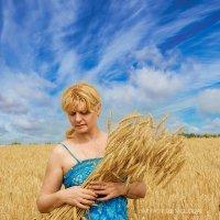 Пшеничный цвет :: Андрей Володин