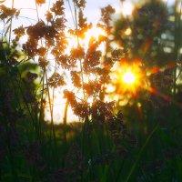 жёлто солнышко :: леонид логинов