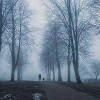 Туман :: Владимир Колесников