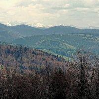 Карпаты :: Роман Савоцкий