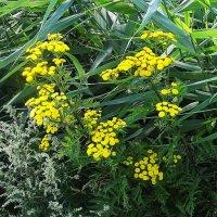 Приозёрная растительность :: Маргарита Батырева