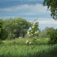 На берегу Невы :: Фотогруппа Весна.
