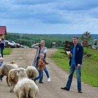 На ферме. :: Наталья