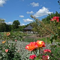 В Ботаническом саду Аугсбурга :: Galina Dzubina