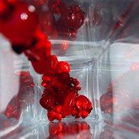 Красные бусы..... :: Валерия  Полещикова