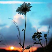 Одиночество... :: Anna Klaos
