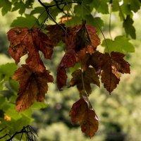 Скоро Осень... :: Николай Саржанов