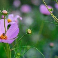 Пчела в цветке :: Владимир Гришин
