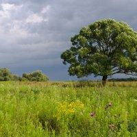 Моё любимое одинокое дерево :: Александр Крупский