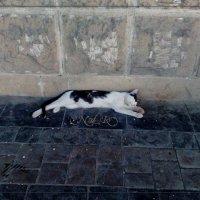 уличная жизнь... :: maxim