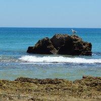 Португалия. Отлив на Атлантике. :: Лариса (Phinikia) Двойникова