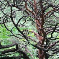 мертвое дерево :: Любовь ***