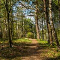 Весенний лес. :: Владимир Безбородов