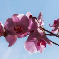 Орхидея :: Евгений Медведев