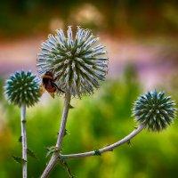 Люблю цветы :: Николай Николенко