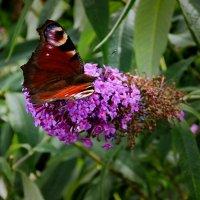 Жила-была бабочка. :: Ирина ...............