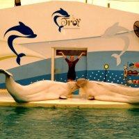 Дельфинарий! :: Натали Пам