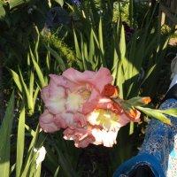 цветы :: валя елисеева
