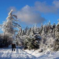 Селфи на фоне зимы. :: Юрий. Шмаков