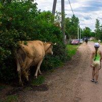 деревенская жизнь :: Андрей Арнольд