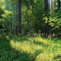 Прохладным августовским зноем... :: Лесо-Вед (Баранов)