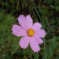 Цветок открылся мне навстречу :: Tarka