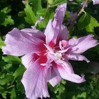 цветы :: fotolv73 Dan