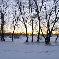 Зима. Деревья у заводи :: Дубовцев Евгений