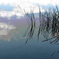 В воде :: Tanja Gerster