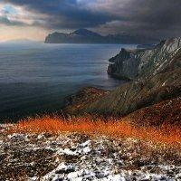 зимние цветовые контрасты :: viton