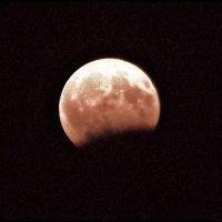"""""""Кровавая Луна""""! :: Надежда"""