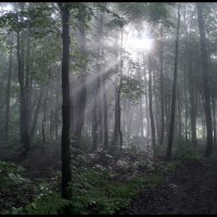 Утро в лесу :: Алексей Патлах