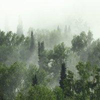 туман :: Алексей Коган