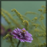 Цветик :: Денис Косенюк