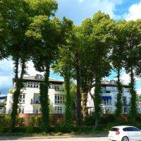 Когда деревья были большими... :: Nina Yudicheva