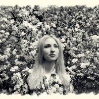 Яблони цветут :: Наталья