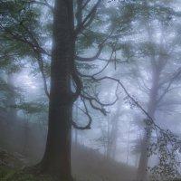 Утро в лесу. :: Александр Криулин