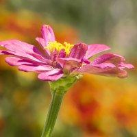 Цветы5 :: Анастасия Сосновская