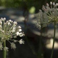 Цветы2 :: Анастасия сосновская