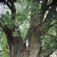 Большое дерево и маленький мальчик :: Евгений Кожухов