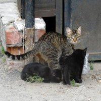 Мама-кошка и котята :: Наталья Пендюк Пендюк