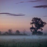 Туман :: Оксана Ingoda